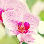 Orchids of love