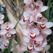 Absolutely beautiful orchids