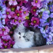 Adorable Kitten with Flowers