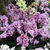 Beautiful orchid bushes