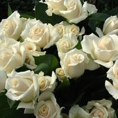 A bunch ow white roses