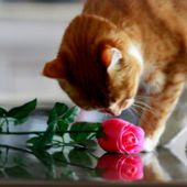 Kitty smells pink rose