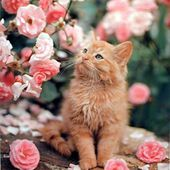 Kitty smells roses!