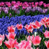 Awesome looking tulips