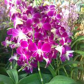 Orchids of Sunshine