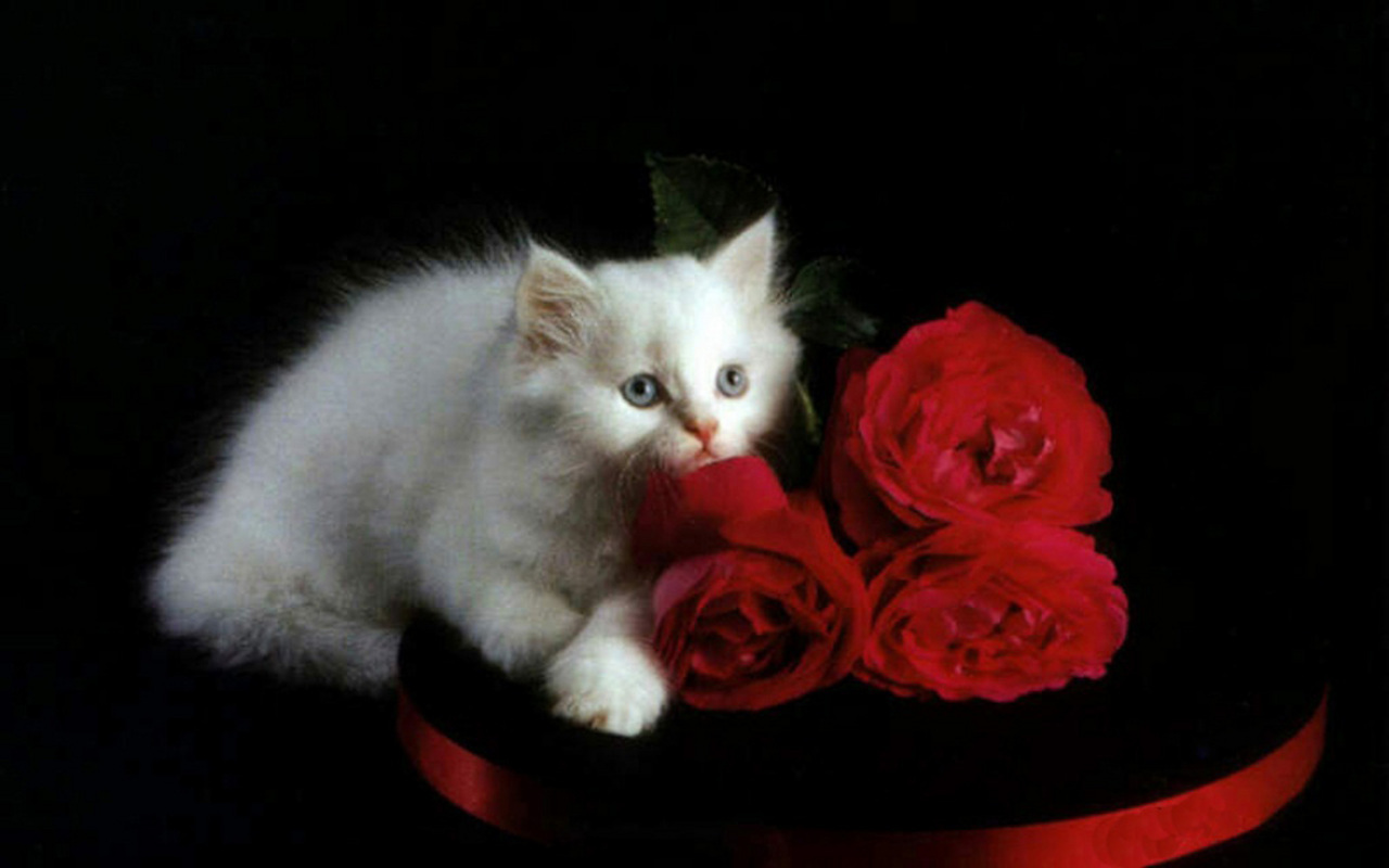 Cute kitten loves roses!