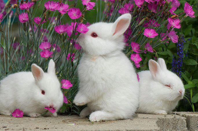 Bunnies love flowers!