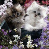 Cute kittens love flowers!