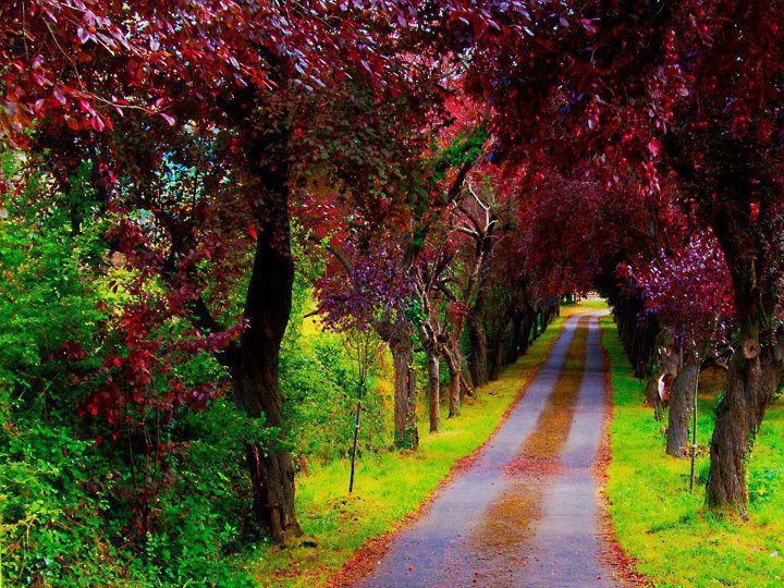 Beautiful path, Asturias, Spain