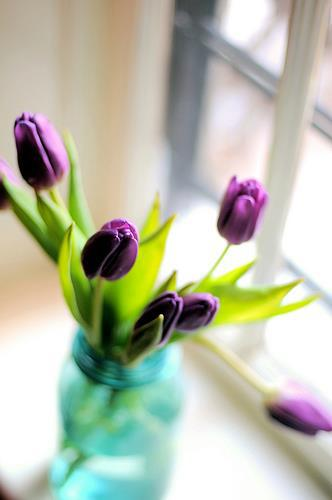 A bunch of purple tulips