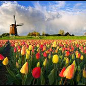 Welcome to Holland!