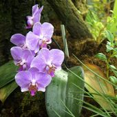 Purple orchids with drops
