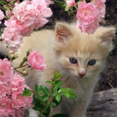 Adorable kitty in flowers