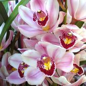 Tender pink orchids