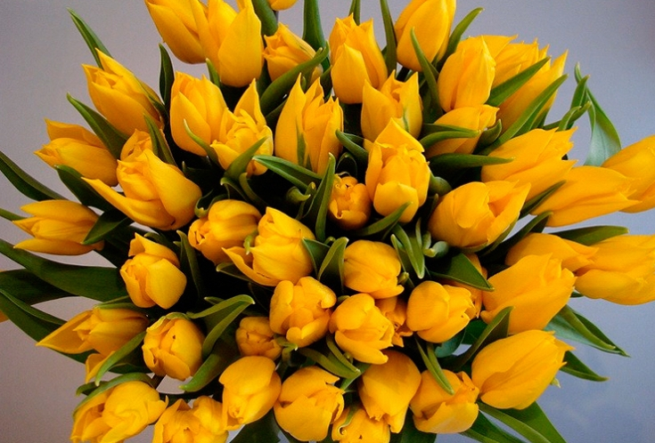 Huge bunch of yellow tulips