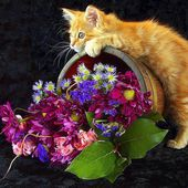 Cute Kitty loves flowers