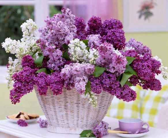 Basket of Beautiful Lilac