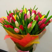 Bunch of fresh tulips