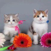 Kitties love flowers
