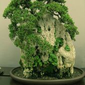 Gorgeous bonsai