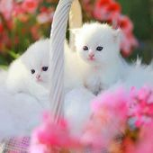 Kittens like flowers!
