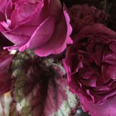 Begonia rex and vintage roses