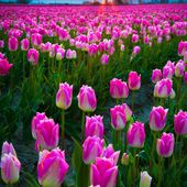 Skagit Valley Washington Dawn