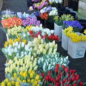 Think Spring and pretty Tulips!