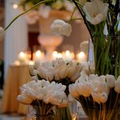 Bunches of white tulips