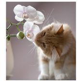 Kitten loves orchids!