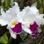 What a beautiful orchids!