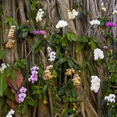 Orchids in nature