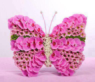 Pink orchid butterfly