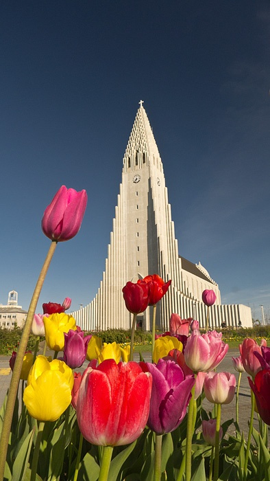 Church and tulips in Reykjavik