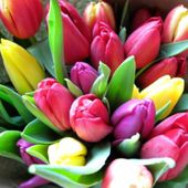 Bunch of bright tulips