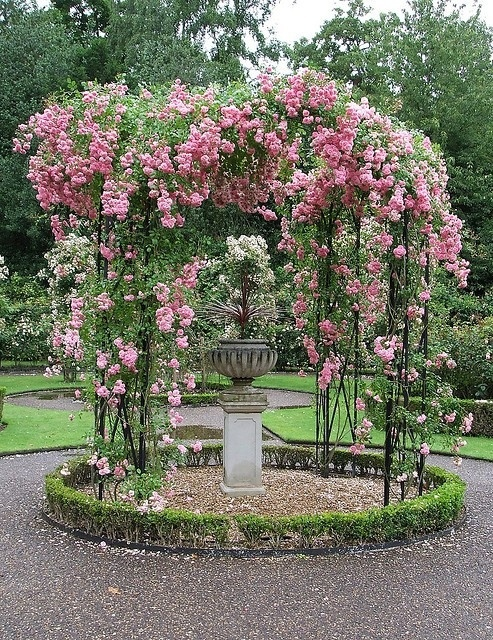 Rose covered gazebo