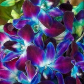 Beautiful Coloured Orchids