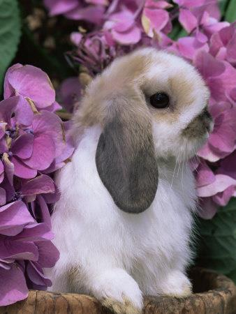 Bunny loves flowers