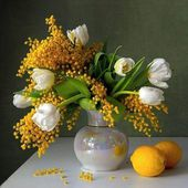 Mimosa and white tulips