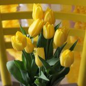 Yellow tulips and a yellow chair