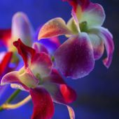 Beautiful bright orchids