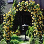 Arch of yellow