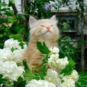 Cute kitten loves white flowers