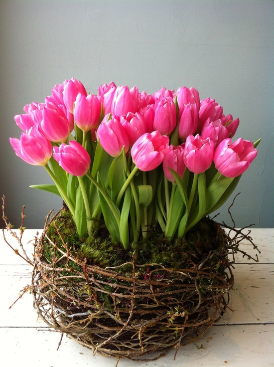 Nest of pink tulips