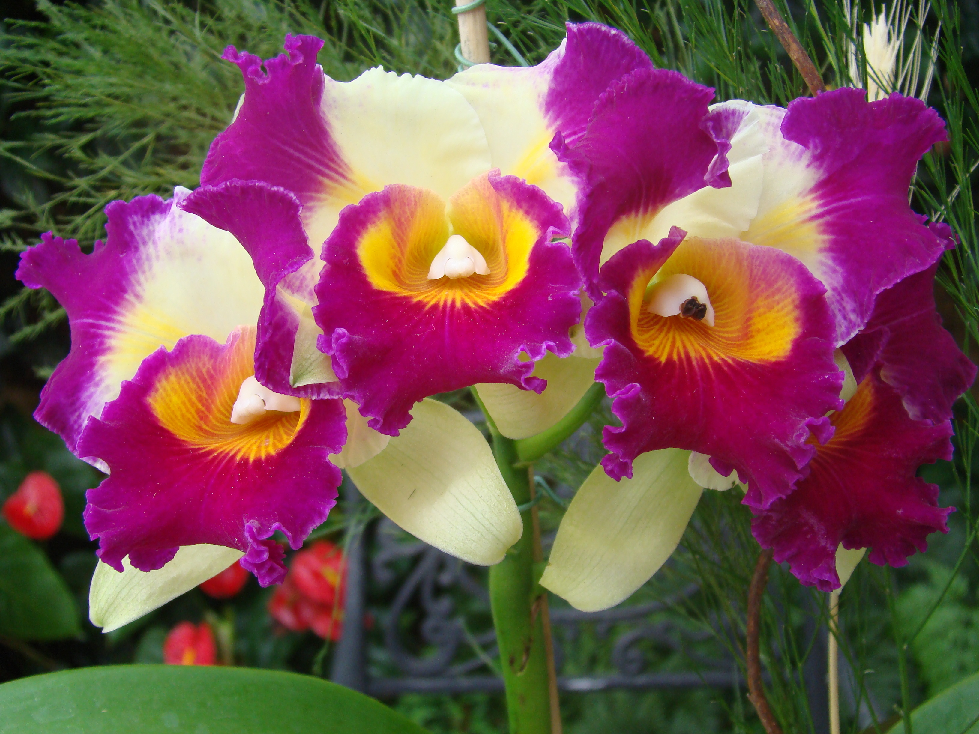 Blc. Hsinying Sunset