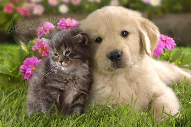 Cute pets love flowers