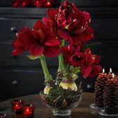 Dark Red Flower Centerpiece