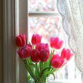 Pink tulips on a windowsill
