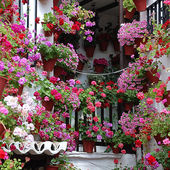 What a beautiful courtyard!