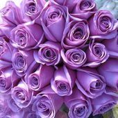 Huge bunch of lavender roses